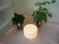 マッサージ室のアロマや植物の写真